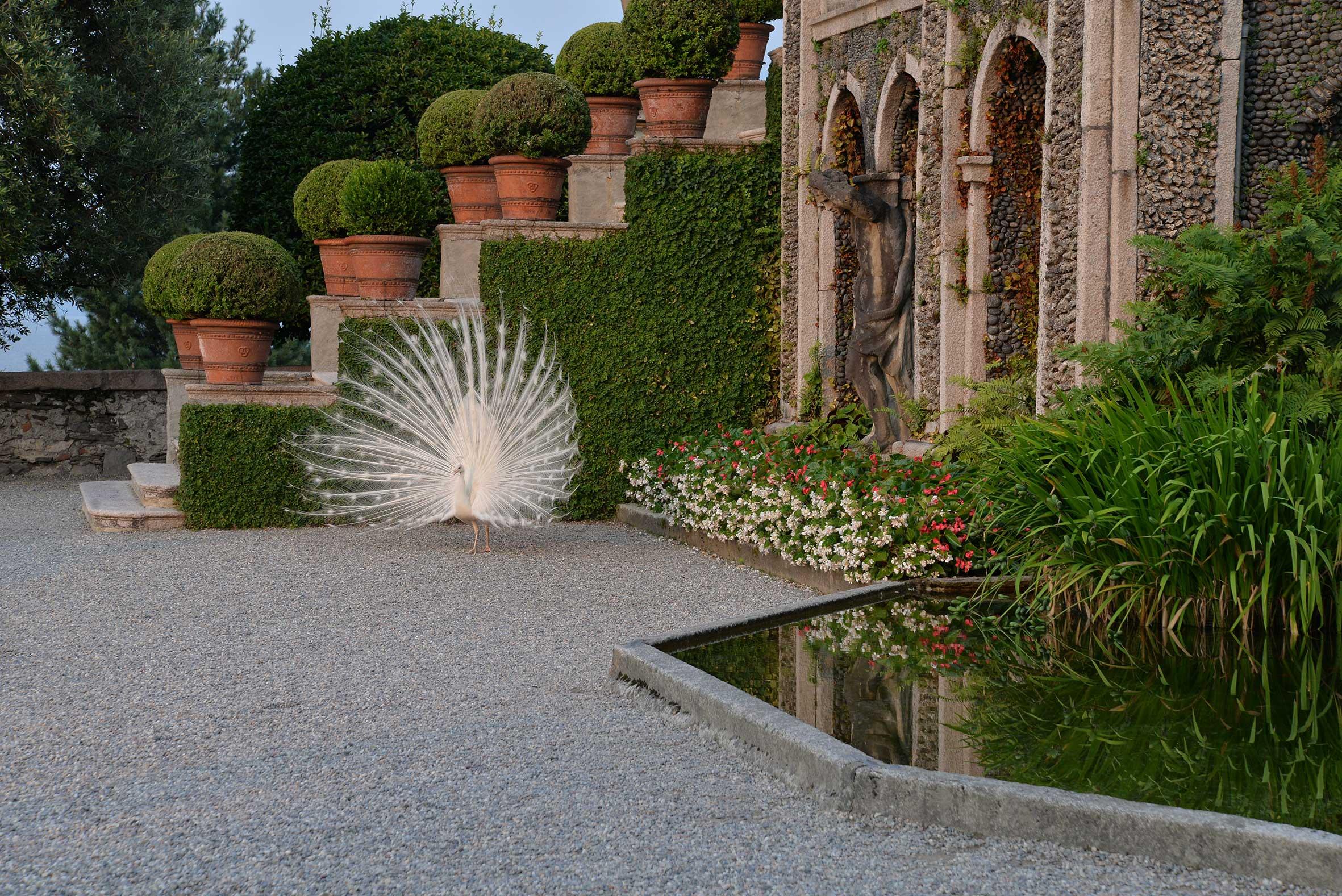 Gärten-Borromeo-Pfau-Lago-Maggiore-002