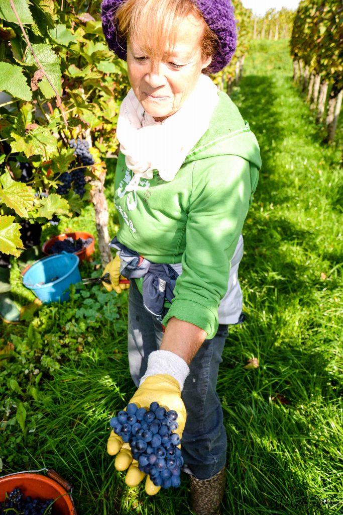Thea kann sich Ferien ohne die Hagnauer Weinberge gar nicht mehr vorstellen. Foto: Flora Jädicke