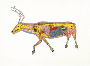 William Noah. Inuit (Baker Lake), 1943-2020. The Skeletoned Caribou, 1974. Coloured Pencil on paper. Collection of the WAG. Acquired through a grant from Hudson's Bay Oil and Gas Company LimitedWilliam Noah. Inuit (Baker Lake), 1943-2020. The Skeletoned Caribou, 1974. Coloured Pencil on paper. Collection of the WAG. Acquired through a grant from Hudson's Bay Oil and Gas Company LimitedWilliam Noah. Inuit (Baker Lake), 1943-2020. The Skeletoned Caribou, 1974. Coloured Pencil on paper. Collection of the WAG. Acquired through a grant from Hudson's Bay Oil and Gas Company Limited